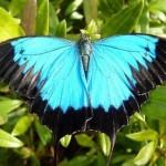 fluturi-tropicali-vii-la-muzeul-antipa